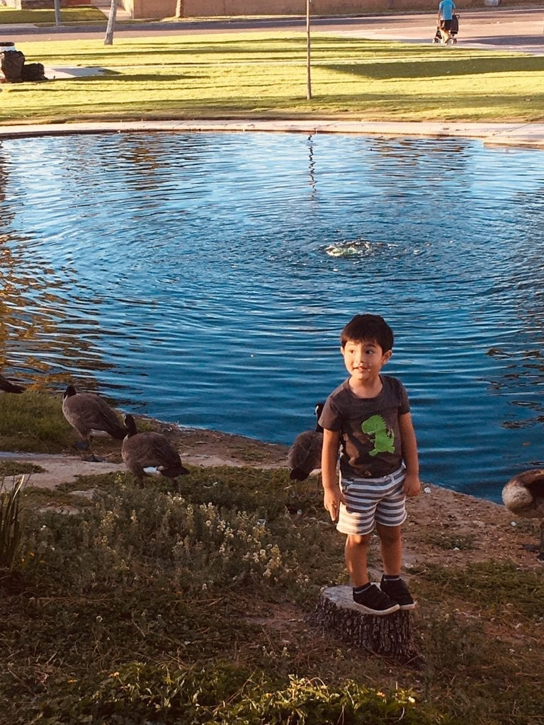 A boy stands on the edge of a pond with ducks.